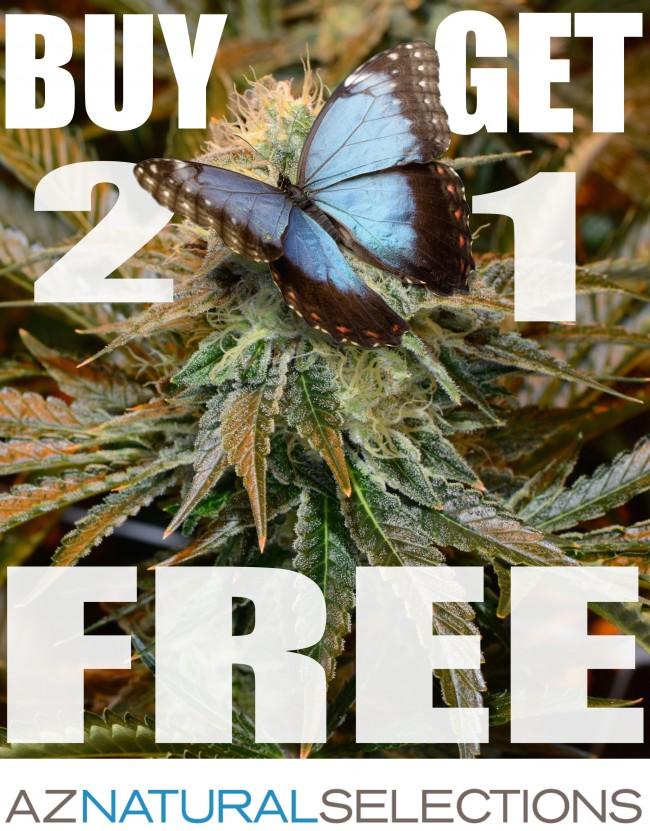 Buy 2 get 1 free flower!