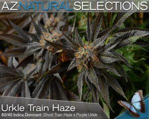 Urkle Train Haze Medical Marijuana Strain Profile