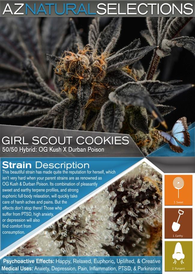 Girl Scout Cookies Medical Marijuana Strain Profile