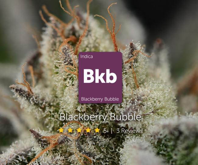 Blackberry Bubble Leafly Profile