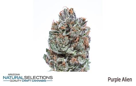 Arizona Natural Selections - Purple Alien MMJ for Sale Phoenix